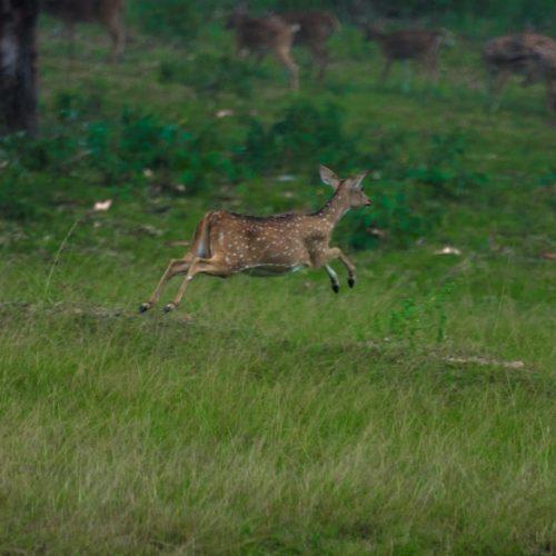Wild Life Photography